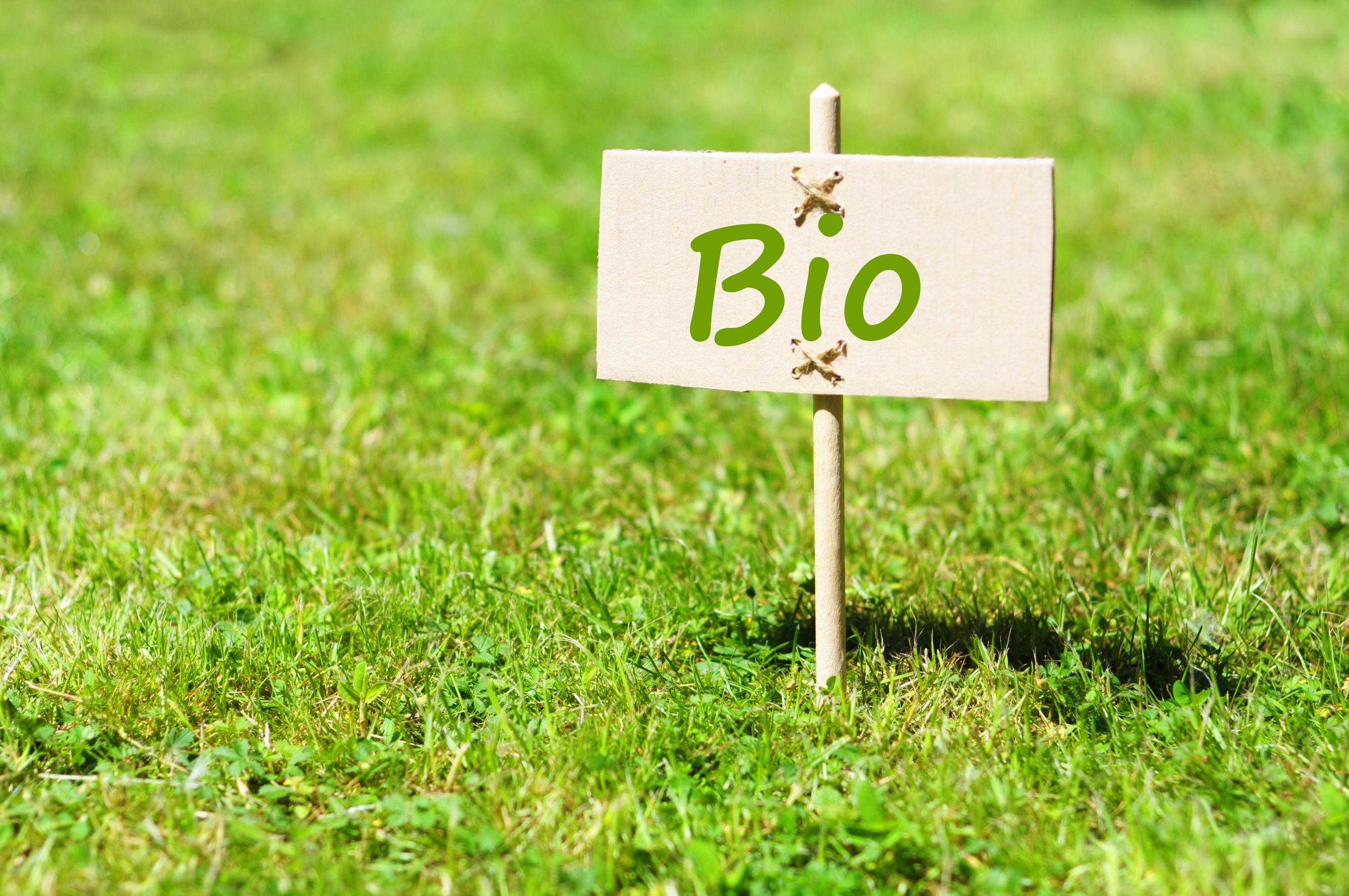 Une Pate A Modeler Bio Fait Maison Biotissime