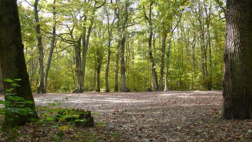 En quoi consiste un groupement forestier ?